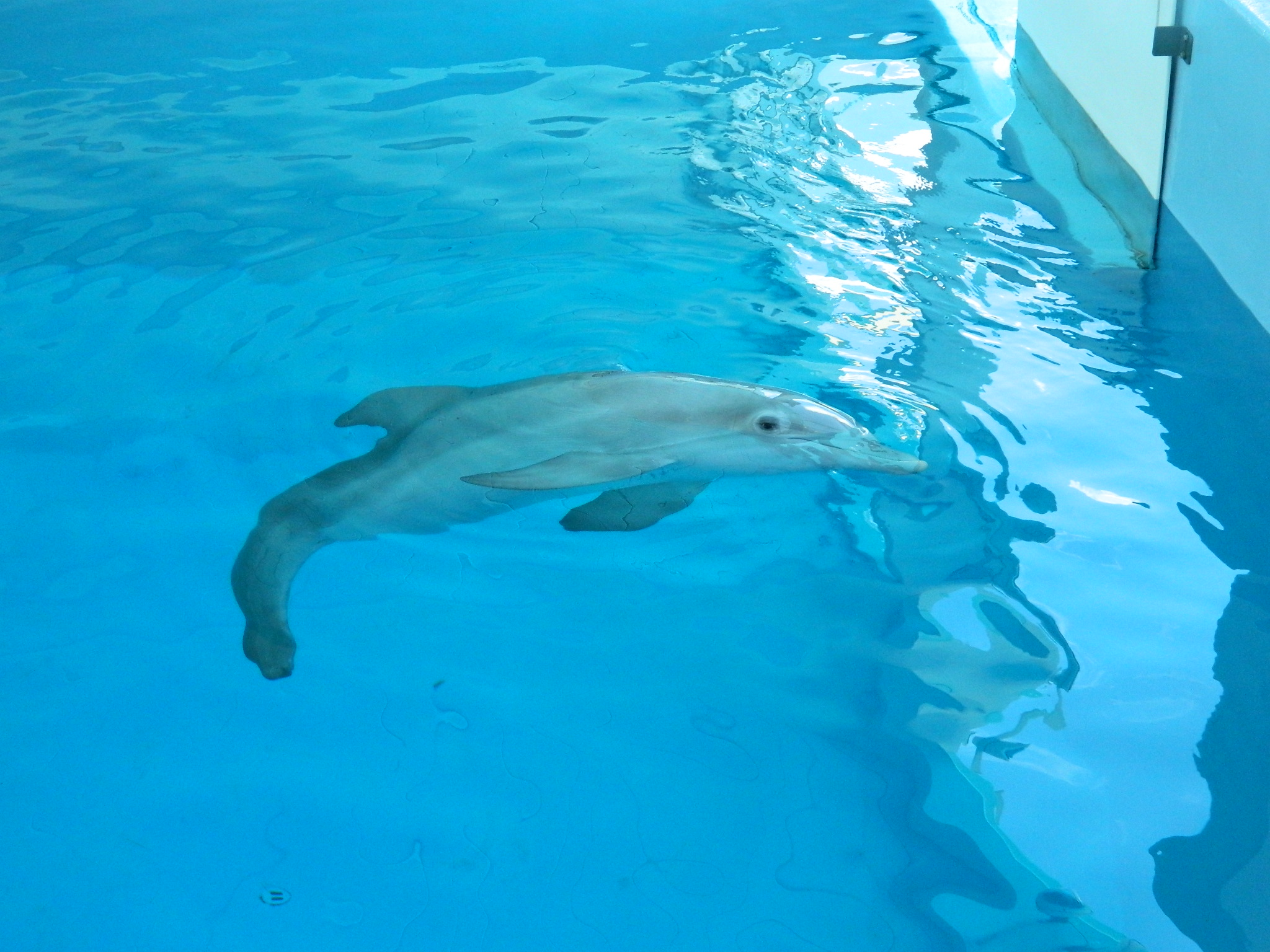 Dolphin Tale 2 Hag In Florida To Meet The Cast And Check
